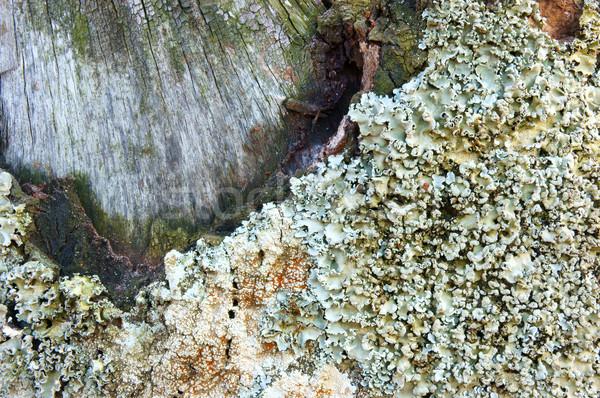Patrón setas corteza blanco asombroso Foto stock © xuanhuongho