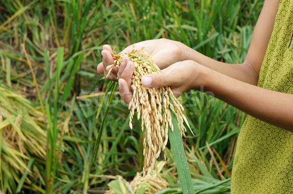 świat żywności bezpieczeństwa głód asia Zdjęcia stock © xuanhuongho