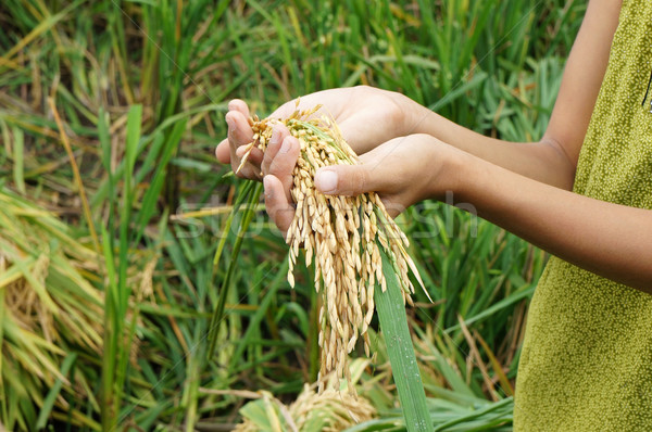 Mundo alimentos seguridad hambre Asia campo de arroz Foto stock © xuanhuongho