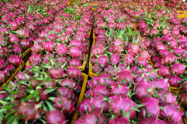 Dragon fruit, agricultural product, Vietnam Stock photo © xuanhuongho