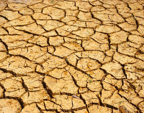 Aszály föld klímaváltozás forró nyár széna Stock fotó © xuanhuongho