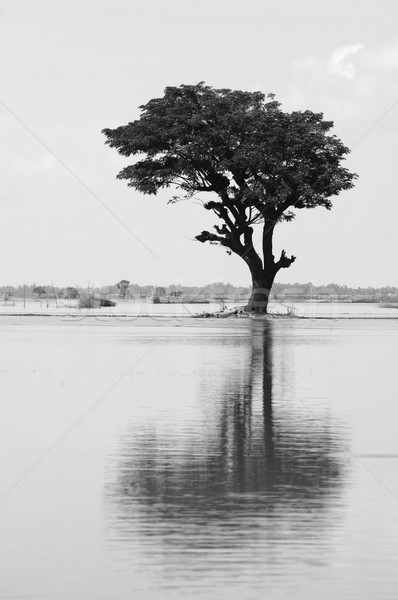 Lonely tree reflect on water Stock photo © xuanhuongho