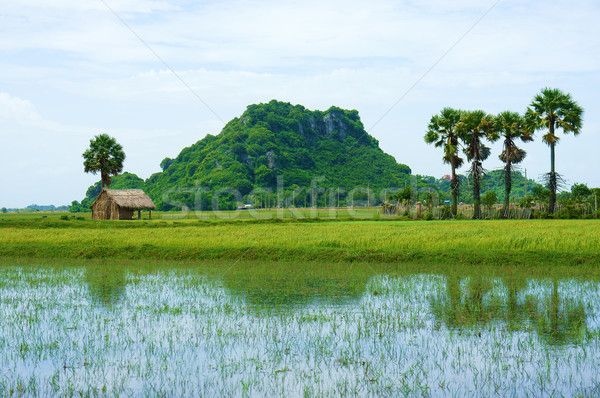 Hegy delta Vietnam tájkép hely utazás Stock fotó © xuanhuongho