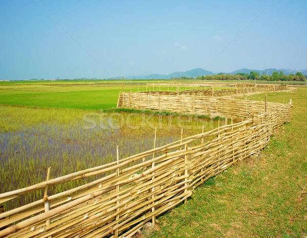 Landelijk veld bamboe hek mooie groene Stockfoto © xuanhuongho