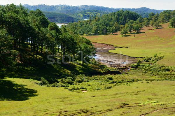Ekologia podróży trawy sosny dżungli krajobraz Zdjęcia stock © xuanhuongho