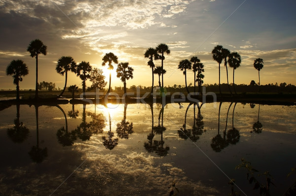 cloudscape and palm trees in silhouette reflect on water in suns Stock photo © xuanhuongho