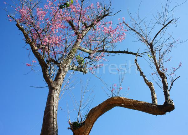 Fiore di primavera bella natura abstract sakura fiorire Foto d'archivio © xuanhuongho