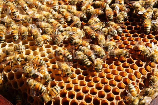 Beekeeping at Vietnam, beehive, bee honey Stock photo © xuanhuongho