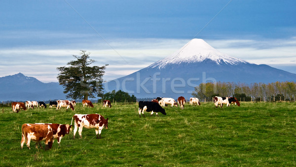 Idyllic landscape of Osorno Volcano, Lake Region, Chile  Stock photo © xura
