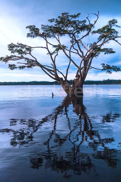 Amazon Rainforest park doğa manzara göl Stok fotoğraf © xura