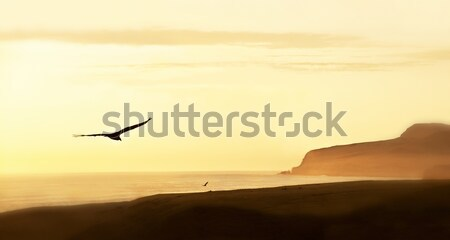 Stock photo: Peruvian Coastline, Paracas National Reserve, Peru