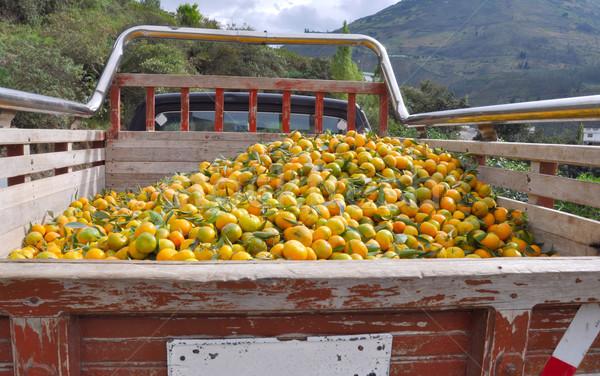 Stok fotoğraf: Yukarı · kamyon · gıda · ahşap · doğa