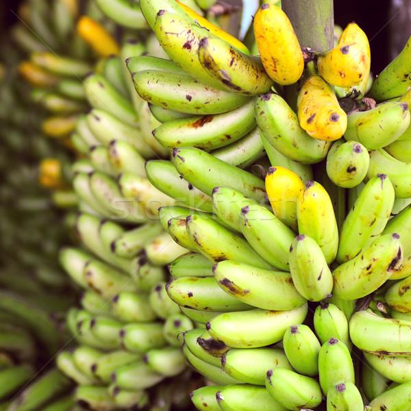 Plátano américa latina calle mercado Ecuador frutas Foto stock © xura