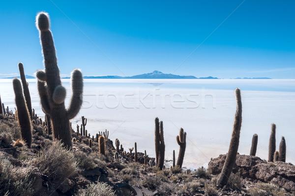 Tuz göl Bolivya dünya güneybatı yükseklik Stok fotoğraf © xura