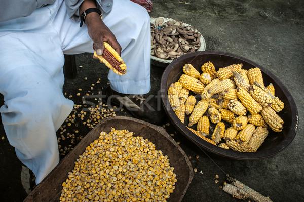 Milho colheita mão indiano agricultura masculino Foto stock © xura