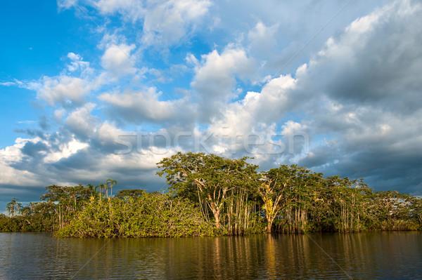 Foresta pluviale parco acqua panorama viaggio Foto d'archivio © xura
