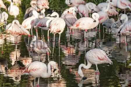 Argentina árvore paisagem pássaro lago parque Foto stock © xura