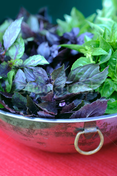 Just picked Basil in the vintage bowl Stock photo © xura