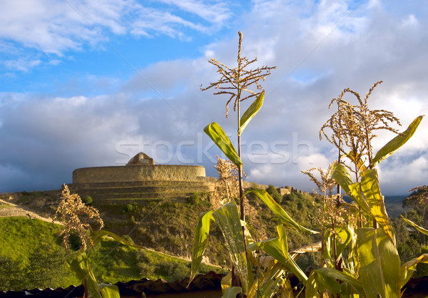 Cornfield near the ruins of the Inca fortress  Ingapirca, Ecuado Stock photo © xura