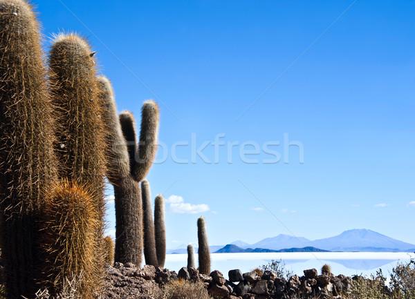 Isla de Pescadores, Salt lake Uyuni in Bolivia Stock photo © xura