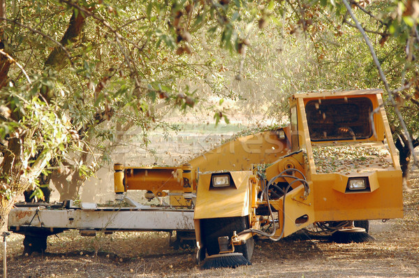 Badem hasat zaman Kaliforniya ABD ağaç Stok fotoğraf © xura