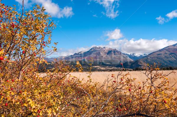 Sonbahar renkler Arjantin ağaç doğa dağ Stok fotoğraf © xura