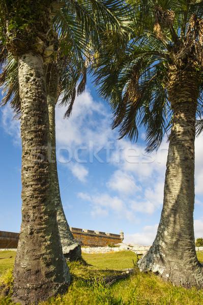 Fort Uruguay jaren muur palm Stockfoto © xura