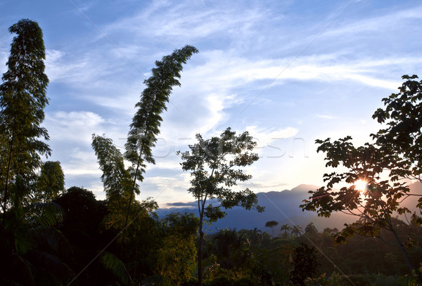 From Andes to Amazon, View of the tropical rainforest, Napo Prov Stock photo © xura