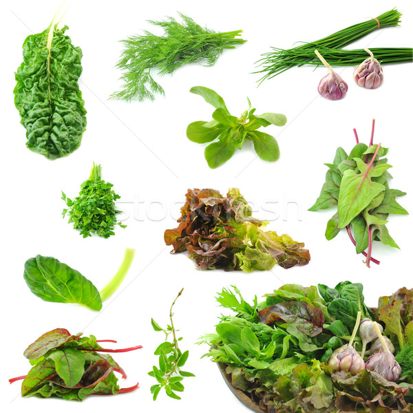 Coleção fresco ervas necessário cozinha espinafre Foto stock © xura
