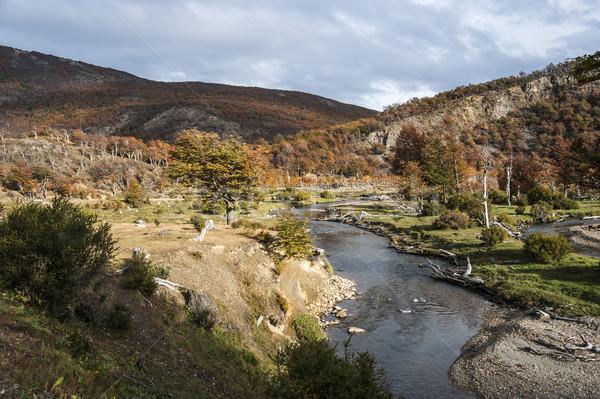 Sonbahar Arjantin yan su ağaç orman Stok fotoğraf © xura
