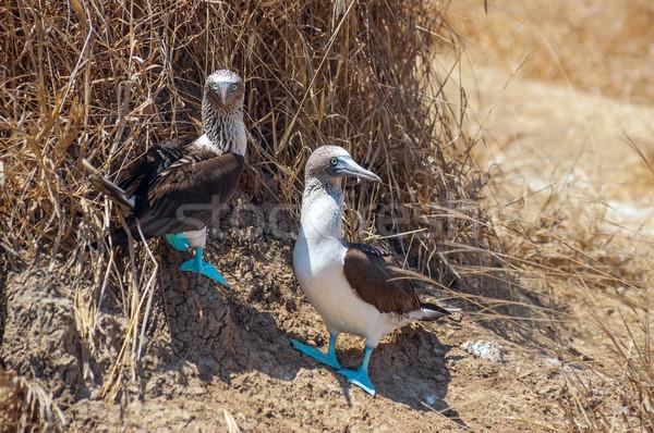 Aile portre su aile deniz kuş tüy Stok fotoğraf © xura