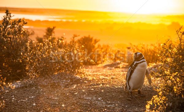 De manhã cedo Argentina praia paisagem mar pássaro Foto stock © xura