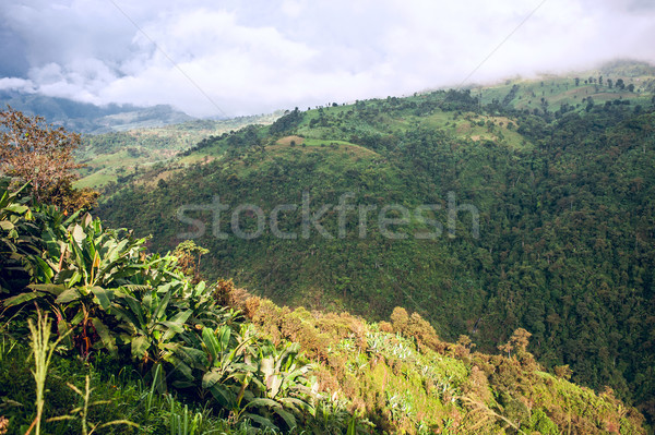 Equador céu bananas verde viajar palmeira Foto stock © xura