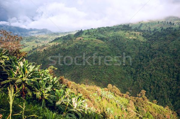 Ekvador gökyüzü muz yeşil seyahat hurma ağacı Stok fotoğraf © xura