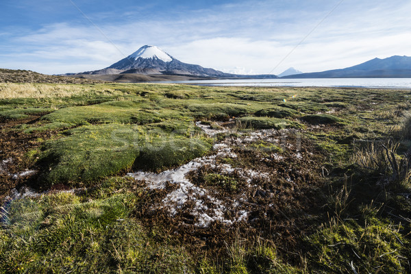 Snow capped Parinacota Volcano reflected in Lake Chungara, Chile Stock photo © xura