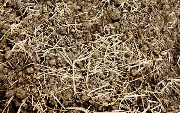 texture soil and dry grass Stock photo © yanukit