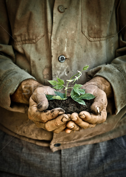Man hands holding a green young plant Stock photo © Yaruta