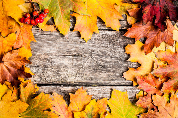 Autumn frame with ashberry Stock photo © Yaruta