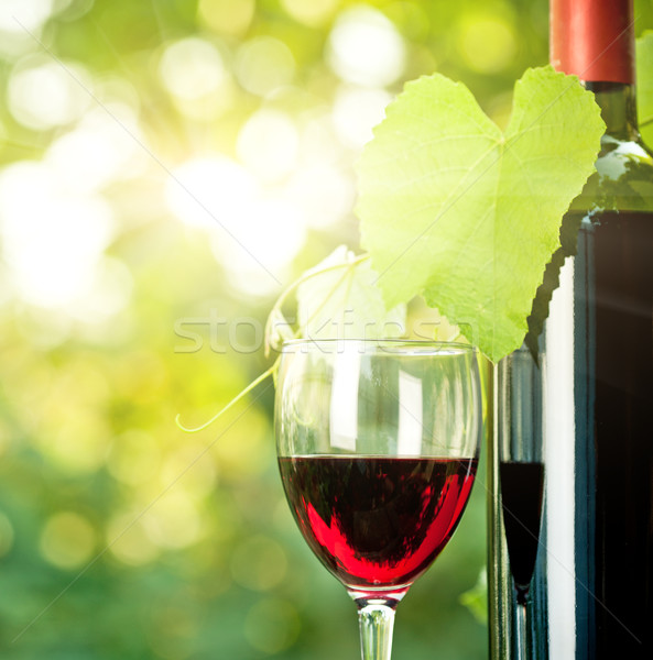 Red wine bottle, one glass and young vine Stock photo © Yaruta
