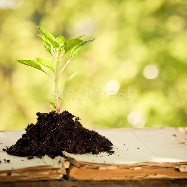 Young plant against natural green background Stock photo © Yaruta