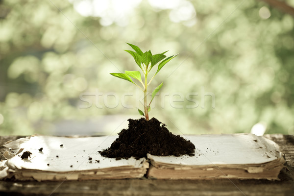 Stock photo: Young plant against natural background