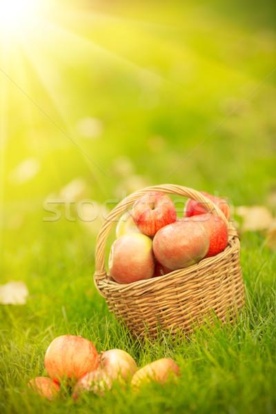 Cesta rojo manzanas otono aire libre alimentación saludable Foto stock © Yaruta