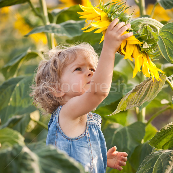 Beautiful child with sunflower Stock photo © Yaruta