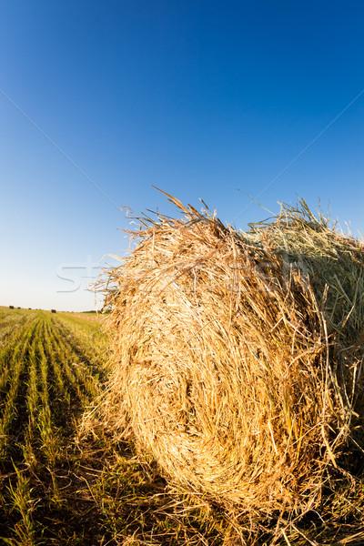 Szénaboglya búzamező ősz aratás lövés halszem Stock fotó © Yaruta