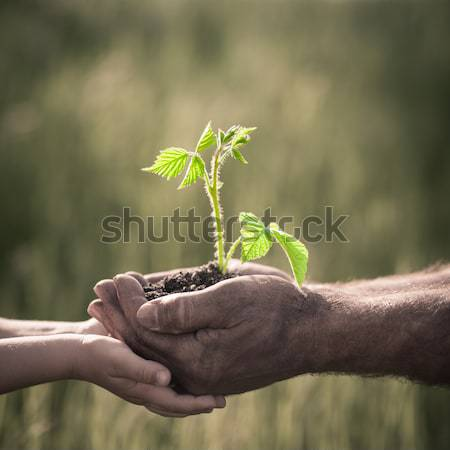Hands of elderly man and baby holding a plant Stock photo © Yaruta