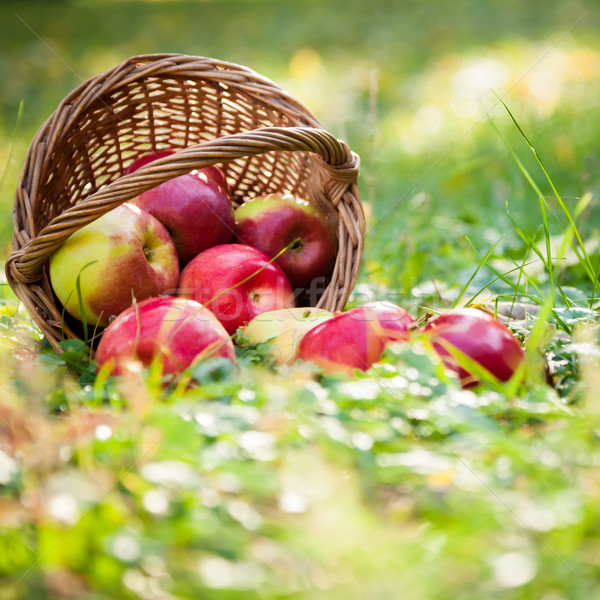 Basket full of red apples Stock photo © Yaruta