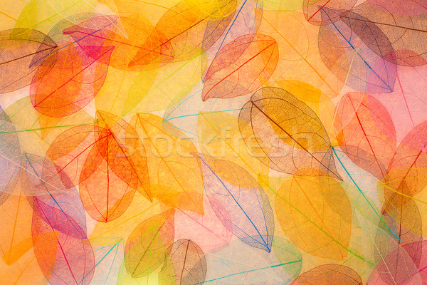 Stock fotó: Absztrakt · ősz · gyönyörű · levelek · textúra · természet
