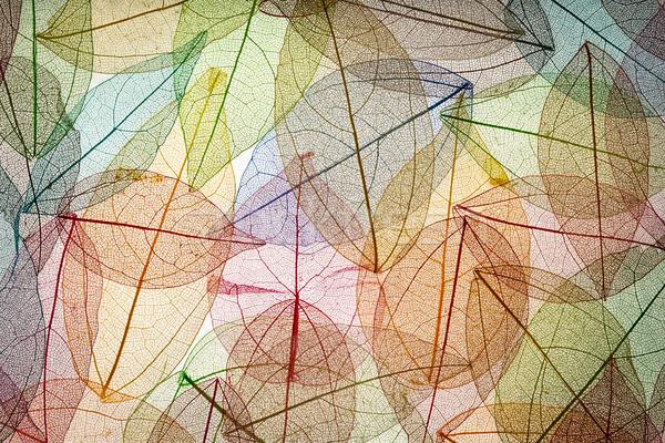 Zdjęcia stock: Streszczenie · jesienią · piękna · pozostawia · tekstury · charakter