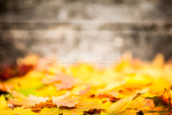 Autumn border from yellow leaves Stock photo © Yaruta
