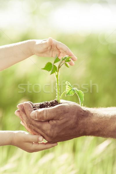 Jóvenes verde planta manos nino altos Foto stock © Yaruta